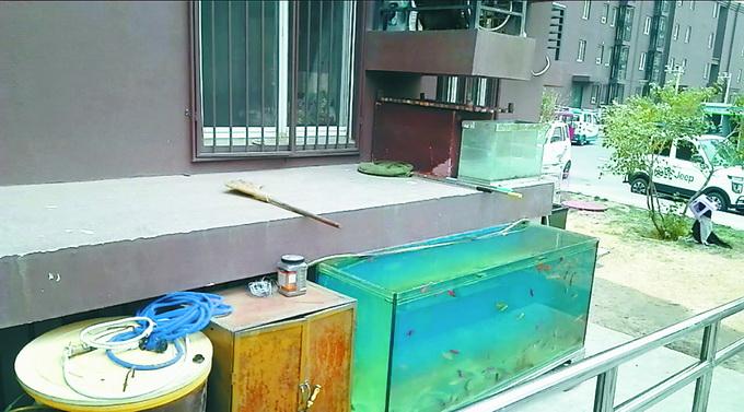 北京朝阳这个小区公共区域养鱼又养鸡,社区本身没有执法权,不能强行处理